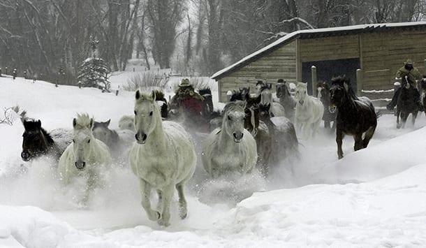 Transportation - Horse Photo